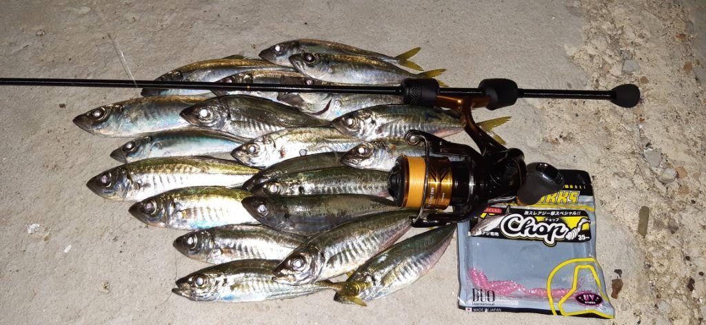 Сафриди уловени по време на Ajing риболов в Черно море, с Tetra Works React 55 и Tetra Works Chop - Peach colour